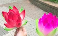 [모이] 연꽃, 그리고 손 안에 담은 '부처님 오신 날'