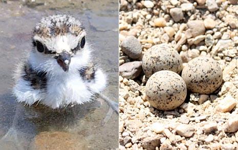 새알 4개로 본 '국격', 한국-캐나다는 달랐다