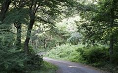 인공냄새 제로, 이게 바로 천연의 숲