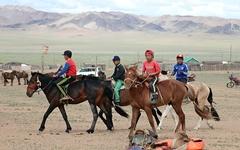 12일간의 몽골여행... 평생 보고도 남을 가축을 보았다