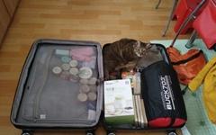 다리 잃은 고양이 데리고 왜 여행 다니냐고요?
