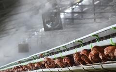 폭염에 가축도 죽을 맛… 전국서 닭·돼지 42만여마리 폐사