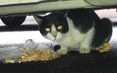 [사진] 길고양이도 힘든 여름, 그래도 희망 갖는 이유