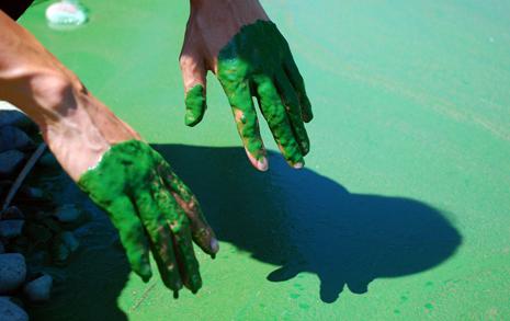 옥상 페인트보다 진한 녹조... 금강은 '최악'이었다