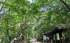 [모이] 시원한 숲과 깨끗한 계곡이 어우러진 피아골 탐방로