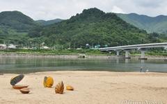 [사진 한 장] 섬진강 초대형 재첩, 먹지 마세요