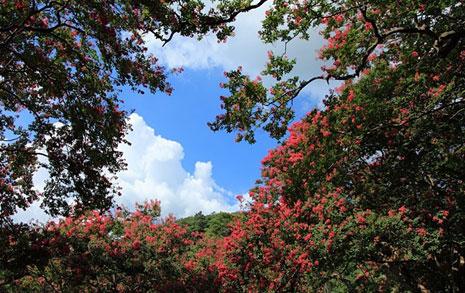 붉은 꽃이 만들어낸 별천지, 더위가 싹 가신다