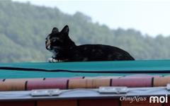 [모이] 지붕 위 고양이가 전하는 가르침