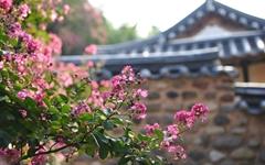 400년 고택과 배롱꽃의 멋진 어우러짐