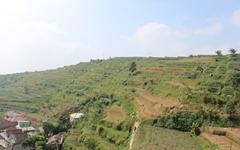 주목받는 '아열대농업', 성공하기 위한 조건은?