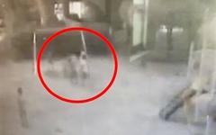 아파트 놀이터에서 축구공 맞은 40대, 초등학생 폭행해 입건