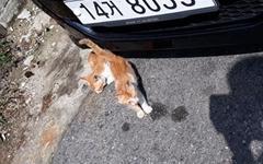 자동차 밑 어린 고양이 두 마리