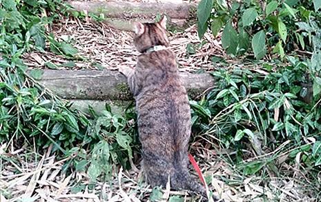 고양이는 꿋꿋이 산을 올랐다, 네 발 아닌 두 발로