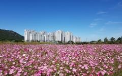 [사진] '충남도청 앞 코스모스'... 반려동물도 즐기는 추석연휴