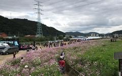 [주장] 가을을 오염시키는 가을꽃 축제