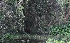 [영상] 베트남 답사... 늪이 아니라 습지였다