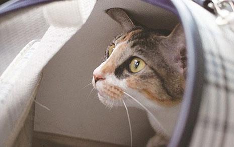 완치 없는 고양이의 암을 치료하는 이유