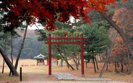 조선 왕릉에서 가을과 이별하다