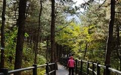 [모이] 가을이 깊어가는 안산 자락길 단풍 산책하세요~