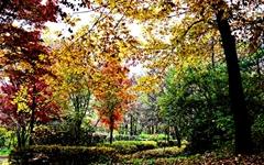 가을 단풍은 꽃보다 아름답다