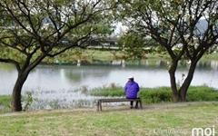 [모이] 다양한 가을 풍경 품은 정다운 물줄기 순천 동천