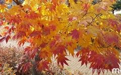덕평휴게소의 가을 풍경