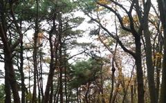 가을산 빈 의자 참 마음에 드네!