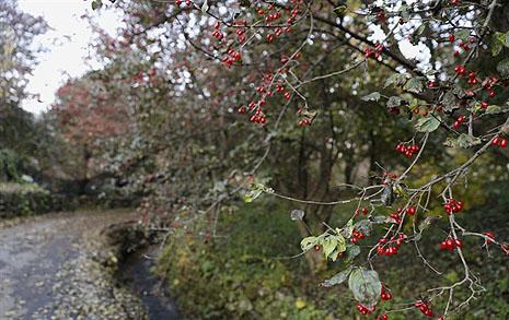 가을의 뒤태, 붉은 산수유가 불을 지르는 곳