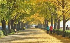 가을의 끝자락, 지하철 1호선으로 떠나는 여행