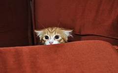 고양이 케이지가 없으면 벌어질 수 있는 일