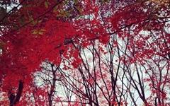 [모이] 산도 아닌데 숲 속 같은 효창공원의 만추
