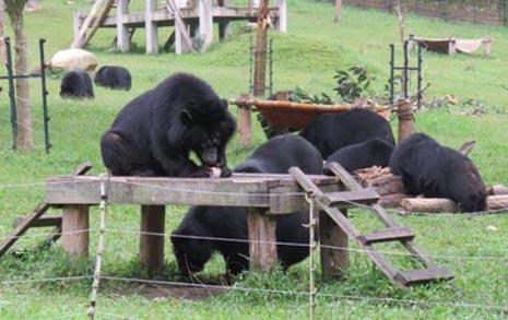 쓸개즙 신세... 반달곰은 행복해질 수 있을까