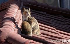[모이] 햇살 좋은 날이면 지붕 위에 모이는 동네 고양이들