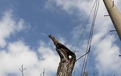 송찬호 시인은 호두나무 고사목에서 '비상'을 읽어낸다