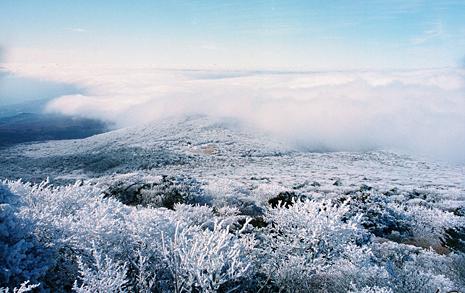 눈 귀한 겨울... 열흘 기다렸더니 한라산에 드디어