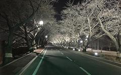 야간 조명으로 손님 맞을 준비 중인 경주 벚꽃터널