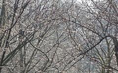 [사진] 순천 선암사의 봄