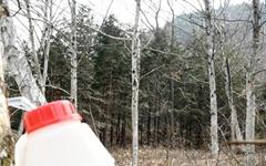 [사진] 자작나무 '곡우물' 약수