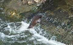 [모이] 산란철, 물고기들을 응원하게 되는 순간