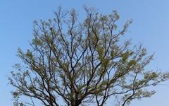 '5분 전 은행나무', '기막힌 모과나무'를 아시나요?