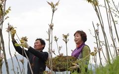 [사진] 지리산 봄나물 옻순 따기