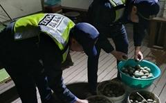 천연기념물 난도에서 괭이갈매기 알 불법 채취한 일당 검거