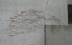 시멘트벽에도 혈관이 흐른다