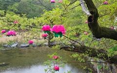 봄이면 언제라도 좋다, 그래서 '춘마곡'