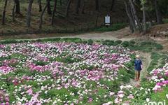 힐링 꽃밭 골목길 조성, 경주 시민들이 팔 걷어붙였다
