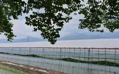 지리산과 섬진강이 키운 구례 오이를 아시나요?
