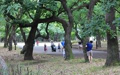 전국 최고의 '숲캉스' 명소는 경주 황성공원