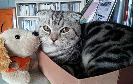 고양이와 친해지기 위해 '집사'가 꼭 알아야 할 것