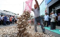 '가격 폭락에 못 참아', 전국 마늘 생산자들 뭉친다