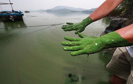이렇게 심한 녹조 물로 농사를 짓는다고요?